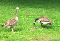 birds2008(1).jpg