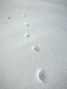 cat's trace.jpg