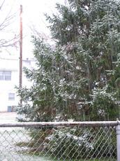 first snow 2008.jpg