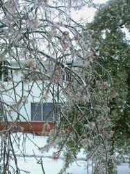 ice tree(2).jpg
