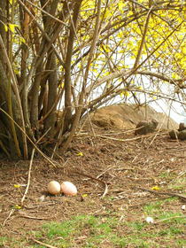 laid eggs(2).jpg