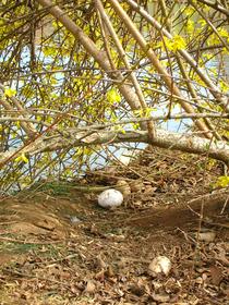 laid eggs(3).jpg