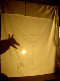 shadow play-1.JPG