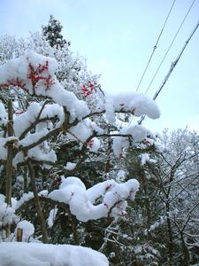 snow 2013.jpg