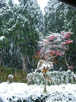 2012 first snow.jpg