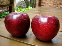 Akibae apple.jpg
