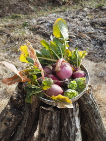 初春の収穫.JPG