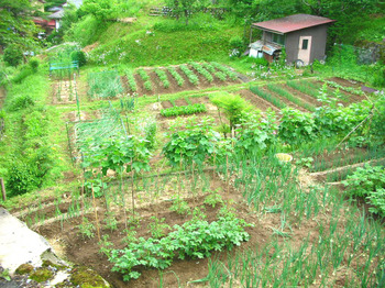beautiful garden.jpg