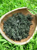 dried yomogi.JPG
