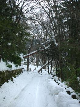 fallen tree(1).JPG