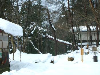 fallen tree(2).JPG
