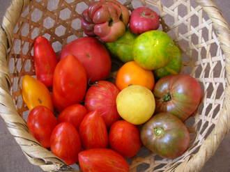 heirloom  tomatos.jpg