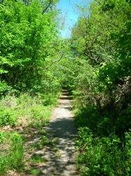 hidden trail (1).jpg