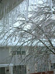 ice tree(1).jpg