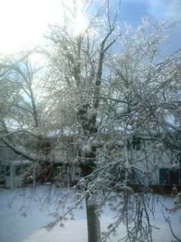 ice tree(3).jpg