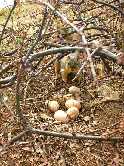 laid eggs(1).jpg