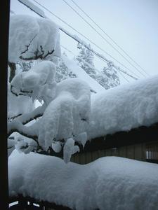 snow 2014-12-17.JPG